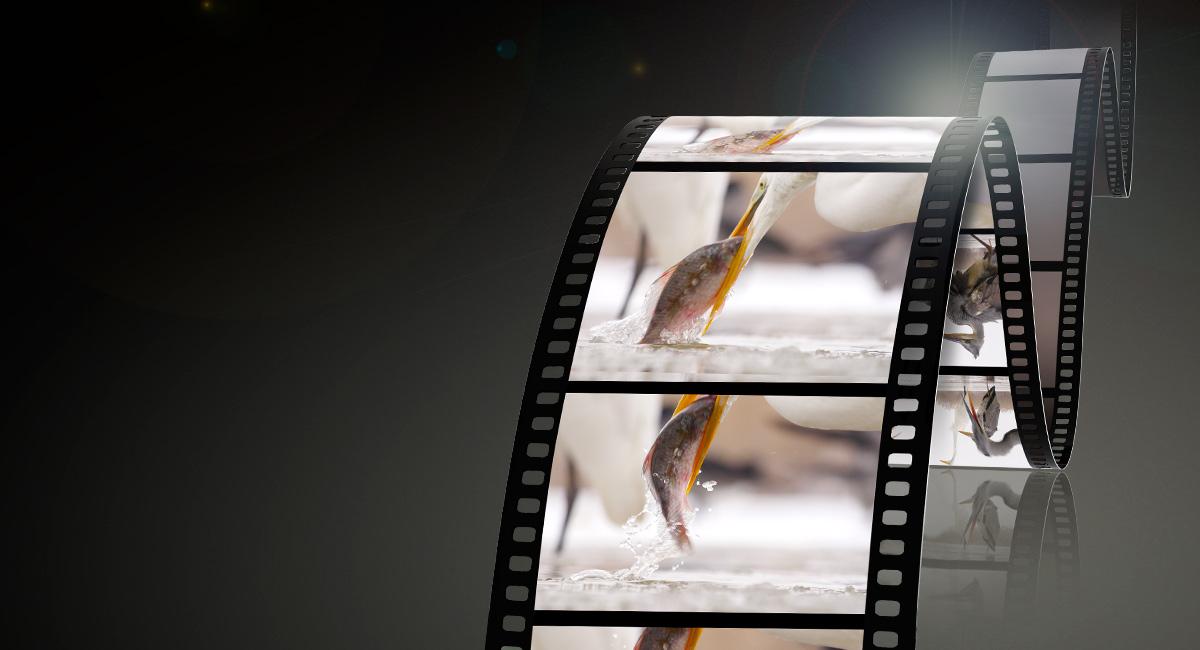 Panasonic-LUMIXG-Objektiv-H-ES50200-Perfekte-Videoaufnahmen